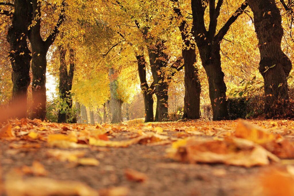 mindfultrek foliage