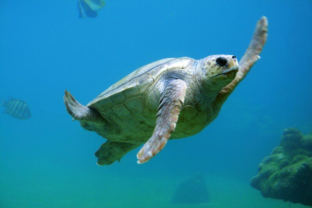 tartarugasfondo