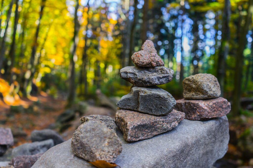 MindfulTrek - alla Scoperta della tua Natura nella Natura